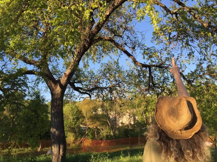 treefolks image